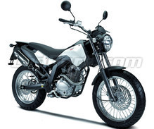 Cross City 125